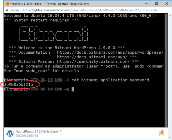 Getting the WordPress password from the browser-based SSH terminal